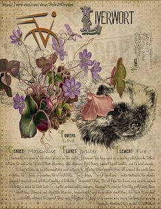 Book of Shadows page Liverwort Sorry This page is only available to my customers for free I don t sell it in the Etsy Magic Herbs, Herbal Magic, Islamic Art Calligraphy, Calligraphy Alphabet, Witch Herbs, Witchcraft For Beginners, Wiccan Crafts, Witch Spell, Wiccan Spells