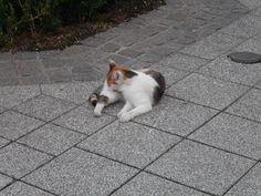 Katze in der Stadt Scheibbs Mystery, Corgi, Animals, Maine Coon Cats, City, Cats, Kunst, Corgis, Animales