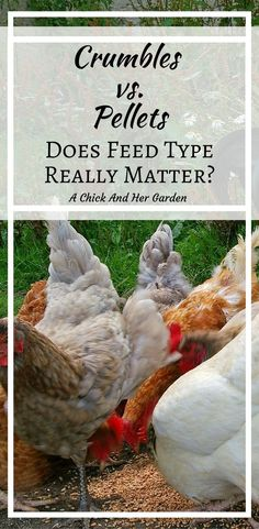 How Feed Type Can Lower Costs - A Chick And Her Garden
