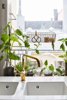 Créez un coin à herbes aromatiques et à salade sur le rebord de fenêtre de la cuisine