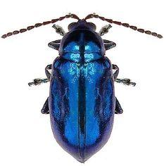 Bright Blue Beetle Vinyl Decal. $2.50, via Etsy.
