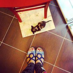 #fromwhereistand  qualche giorno fa è passato a trovarmi in laboratorio un piccolissimo #gattino che si era perso  ... io e Giulia abbiamo provveduto con cibo latte e coccole ... e poi lo abbiamo riportato a casa sua . . . . #latergram #kitty #kittykat #kittylove #cat #catsofinstagram #catstagram #catslovers #gatto #gattiitaliani #gattogram #gattidiinstagram #micetto #micio #miciomiao #miao #meow #igers #igerslazio #igersroma #cutie #cute #cuties #puppy #pet