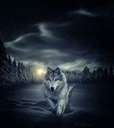Enchanted Wolf