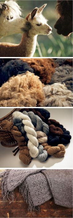 Everybody knows there's nothing warmer and more stylish in the winter than Fair Trade alpaca fleece! Find out how it gets from the farm to your closet!