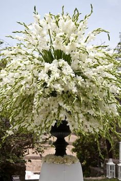 I love gladiolus! Gorgeous for a white wedding!