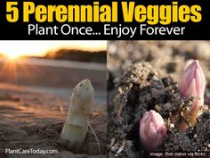 5 Perennial Veggies To Plant Once And Enjoy Forever -