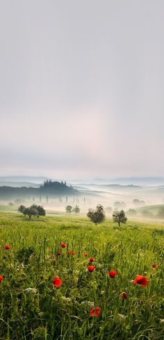 Tuscan spring , Italy