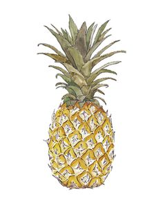PINEAPPLE watercolor illustration by Good Objects