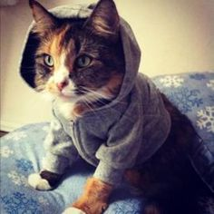 Distractify | 19 Cats Who Are Looking Impossibly Cute In Classy Cardigans