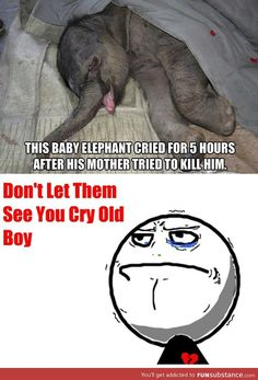 This is so sad.omg this breaks my heart. The love I have for elephants is just beyond. Amazing beautiful creatures they are! Poodle, Clean Jokes, I Want To Cry, Sad Stories, Faith In Humanity, Animal Rights, My Heart Is Breaking, Beautiful Creatures, Crying