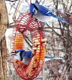 """Wild Birds Unlimited...is my favorite Bird Store...Unlimited it is!"