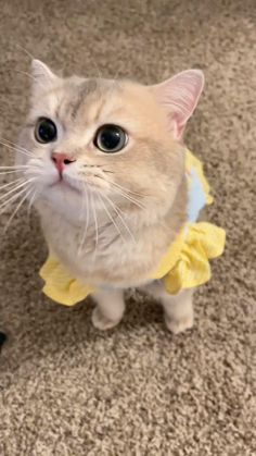 Funny Cute Cats, Cute Baby Cats, Kittens Cutest Baby, Cute Baby Animals, Cute Cats And Kittens, Happy Animals, Cute Funny Animals, Animals And Pets, Cute Babies