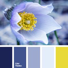 bright yellow | Page 8 of 20 | Color Palette Ideas