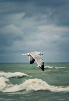 Vogel(Möwe) fliegt über Wasser.