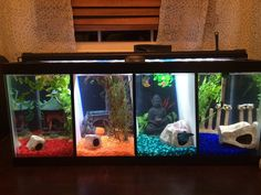 Betta Fish Tank Decoration Ideas Inspirational Full House Pet Training Tips and Hints Home Aquarium, Aquarium Design, Aquarium Fish Tank, Turtle Aquarium, Freshwater Aquarium Fish, Unique Fish Tanks, Cool Fish Tanks, Fish Tank Themes, Fish Tank Design