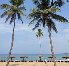 Der private Strand des Raviz Resorts Kovalam  #taipantouristik #indien #kovalam #strand #kerala #palmen #meer #urlaub #wanderlust #soschön #reiseblogger #fernweh #exotik #immereinereisewert #sonne Goa, Kovalam, Strand, Wanderlust, Indian, Longing For You, Sun, Vacation, Nice Asses