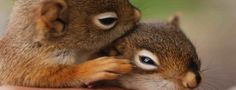 Squirrel – Information and Pictures | Take a Quick Break