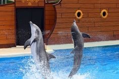 We'd love to see the dolphin show at Sea World San Diego. #EpicSummerRun