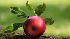 Gambar gratis di Pixabay - Apple, Merah, Apel Merah, Lezat