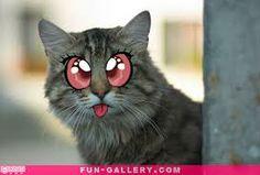 Resultados da Pesquisa de imagens do Google para http://fun-gallery.com/wp-content/uploads/2012/08/Anime-Cat-7.jpg