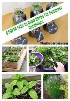 herbs for beginner gardeners