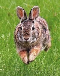 + rabbit on grass +