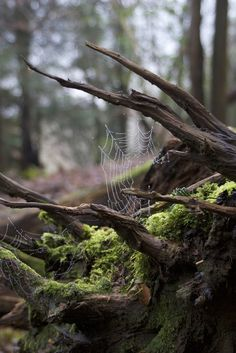 Spiderweb and Trees by Photonoodle