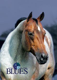 Aint It The Blues (Zips Chocolate Chip x Aint She Hot) 2002 Bay Roan AQHA Stallion
