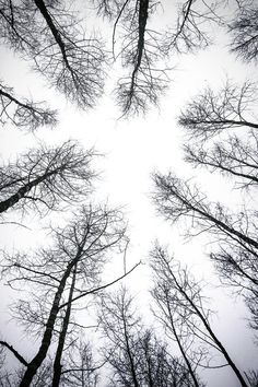 Leafless Trees Under White Sky Picture. Leafless Trees Under White Sky. White Sky, Black And White Canvas, Landscape Lighting Design, Iphone Wallpaper Fall, Thing 1, Acrylic Wall Art, Clear Acrylic, Canvas Prints, Art Prints