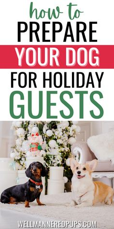 Must-read holiday tips for dog owners! These are the supples you need for the perfect home setup. Dog Owners, Your Dog, Pup, Reading, Holiday, Dogs, Vacations, Word Reading, Holidays