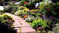 Stepping stones serpentine through a brightly colored Denver lansdcaping Landscape Services, Stepping Stones, Denver, Colorado, Sidewalk, Snow, Gardening, Outdoor Decor, Design