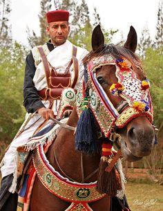 Libyan horse rider