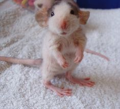 i normally hate mousie type of things but this one is actually kinda cute!  big feet!