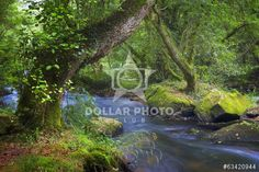 """http://www.dollarphotoclub.com/stock-photo/forests """"Greens"""" in Galicia/63420944 Dollar Photo Club millions of stock images for $1 each"""