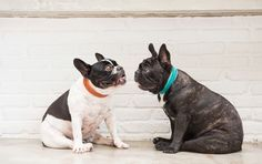 These gorgeous handmade collars and leashes from Vagabond Dogs are easy to get excited about.