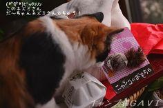 里親さんブログだ~ちゃんエモノさんでちゅ! & ボンネットノックでにゃんこ安全! - http://iyaiya.jp/cat/archives/68958