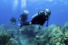 The Top 5 Considerations When Planning Your Dive Vacation! | Costa Blu