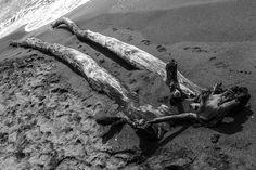 like legs with head... Tuscany - Italy 2014. Riccardo Ceccato (www.pher.it)
