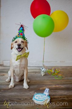 Dog Birthday Photo Shoot...great idea for my dog's birthday!