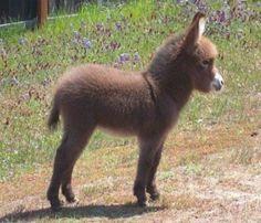 Baby donkey - gorgeous ...