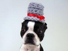 perro sombrero.