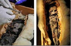 "The body of a perfectly preserved, carefully mummified an alien was found buried in an ancient pyramid. A mysterious creature from between 150 and 160 centimeters was found by an archaeologist near Lahun when exploring a small pyramid near the Dynasty doceaba of Senusret II. However, this fact was not revealed immediately. ""The mummy of what appears to be an alien, dates back more than 2000 years and it seems it would be a humanoid"" said a source at the Egyptian Antiquities"