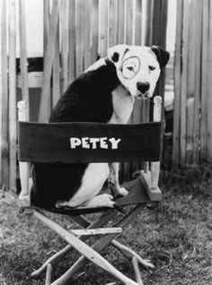 People are so funny. They see my dog and A) ask what he is ( and then usually react in shock when I tell them) or B) Say 'hey it's like Petey from Little Rascals!'