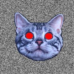 Odd Future Wolfgang Kill Them All Wolf Movie, Trippy Cat, Acid Trip, Cute Cat Gif, Illusion Art, Animal Heads, Eye Art, Vintage Dolls, Cool Cats