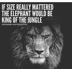 Quote, motivation, inspiration Inspirational quotes Life quotes Motivational quotes Me quotes Words of wisdom Inspirational words Lion Quotes, Me Quotes, Motivational Quotes, Inspirational Quotes, Quotes Images, Lion Memes, Quotable Quotes, Wisdom Quotes, Citation Lion
