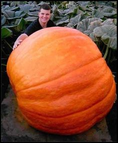 Super big pumpkin