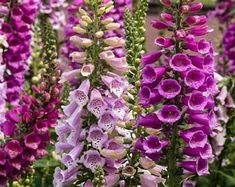 Garden Shrubs, Shade Garden, Garden Plants, Flowering Plants, Gardening Vegetables, Herb Garden, Vegetable Garden, Garden Landscaping, Free Plants