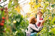 Buy Senior woman with grandaughter gardening in the backyard garden. by halfpoint on PhotoDune. Happy healthy senior woman with her grandaughter harvesting vegetables in greenhouse. Woman and a small girl gardening. Organic Gardening, Gardening Tips, Natural Ecosystem, Home Vegetable Garden, Veggie Gardens, Gardening Magazines, Garden Types, Fun Hobbies, Plant Needs