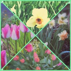 Missing Spring