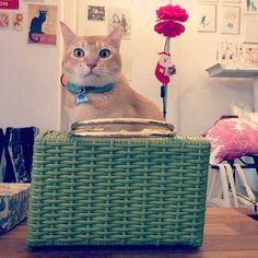 Jack is guarding a vintage green wicker handbag... — pinned by wickerparadise.com